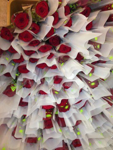 Rosen für Mailing - Blumen für Firmenkunden