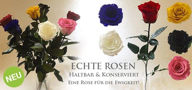 Konservierte Rosen