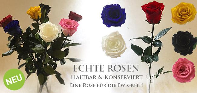 Konservierte Rosen - Eine echte Rose für die Ewigkeit