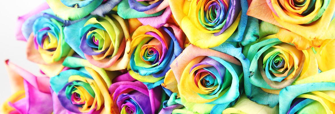 Rosen Regenbogen Header