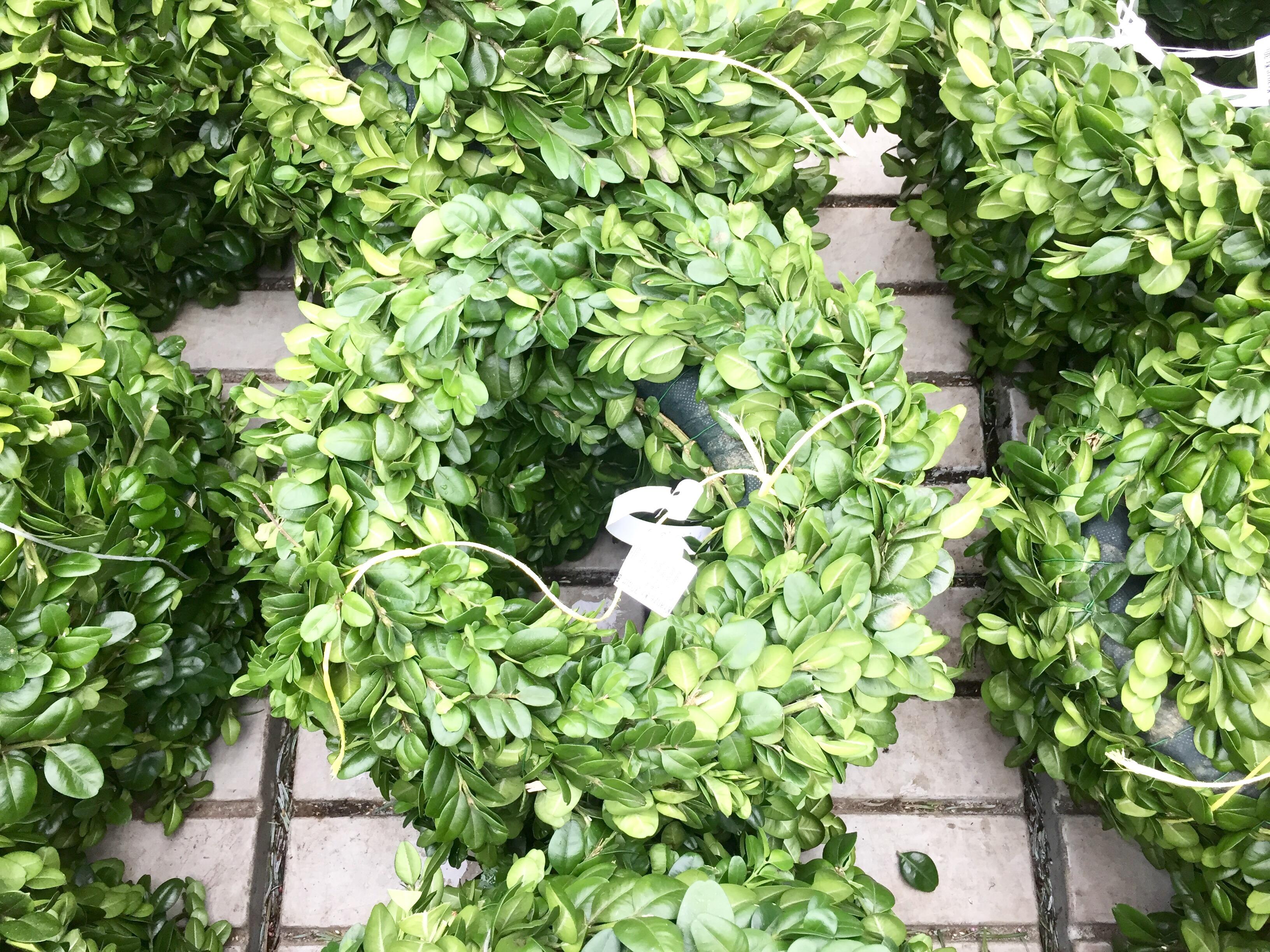 Rohling mit Grün bestückt