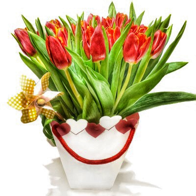 Rote Tulpen in Herztasche