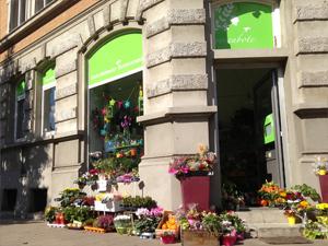Blumen Rosenbote.de in Braunschweig