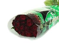 Black Baccara - schwarze Rosen