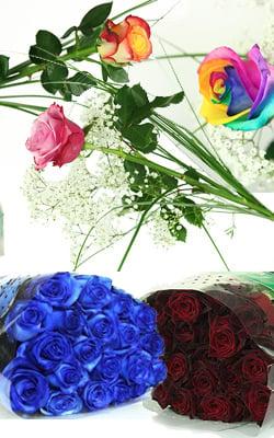Unsere Rosensorten im Verkauf