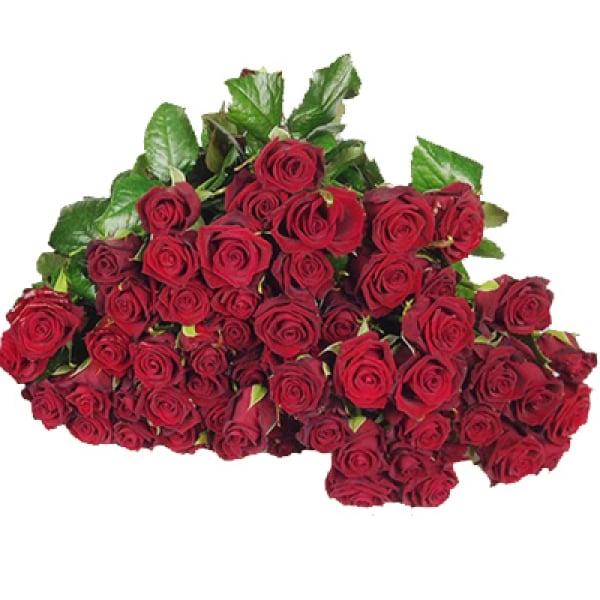 100 traumhafte Rosen