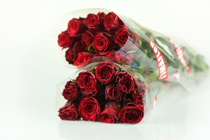 20 Rote Rosen - Medium