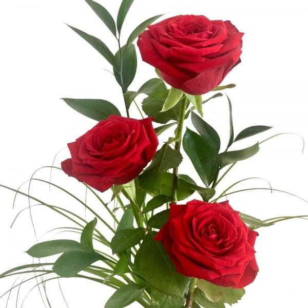 Rote Rosen 3129