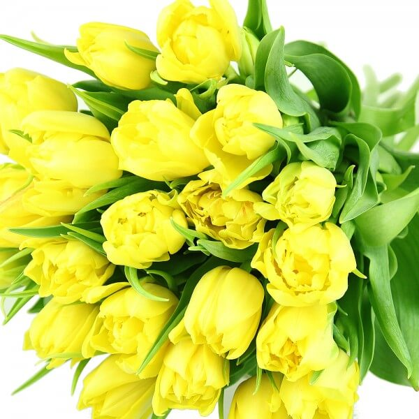 Gelbe Bilder gelbe tulpen rosenbote