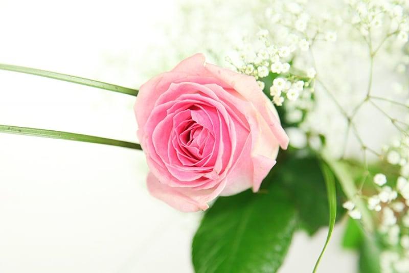 gro e rosa rose inklusive gratis vase rosenbote. Black Bedroom Furniture Sets. Home Design Ideas