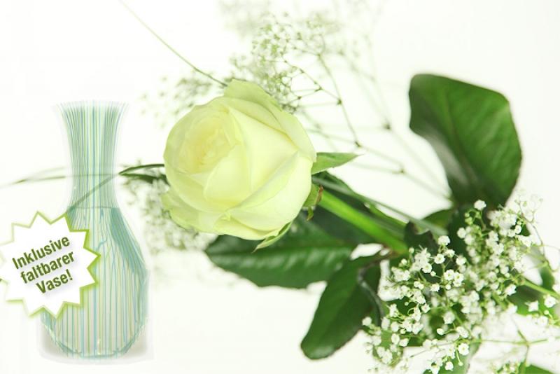 gro e wei e rose inklusive gratis vase rosenbote. Black Bedroom Furniture Sets. Home Design Ideas