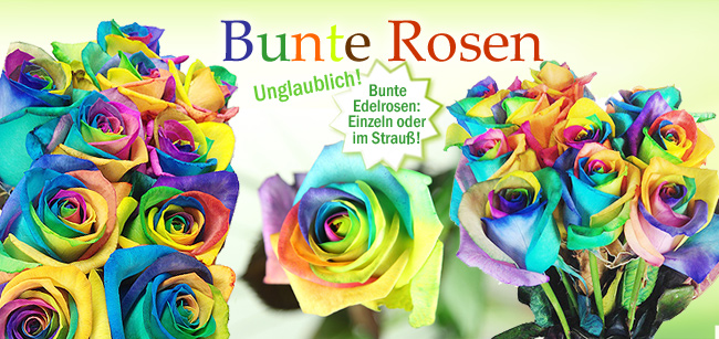 NEU: Regenbogen-Rosen dauerhaft im Preis gesenkt!