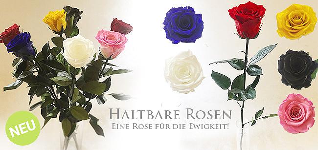 Rosen f�r die Ewigkeit!